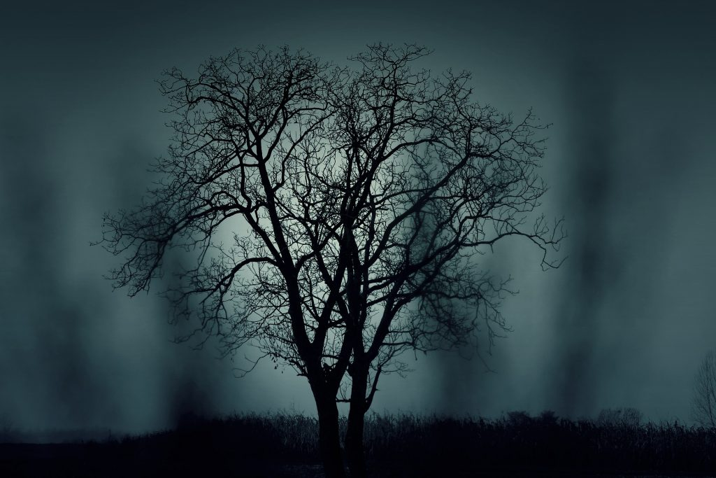 Photo of a spooky tree bathed in moonlight on Halloween.