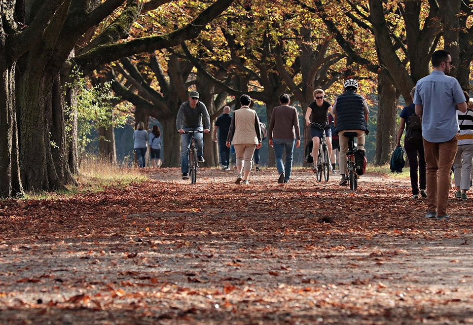 Bikes on a path in autumn.