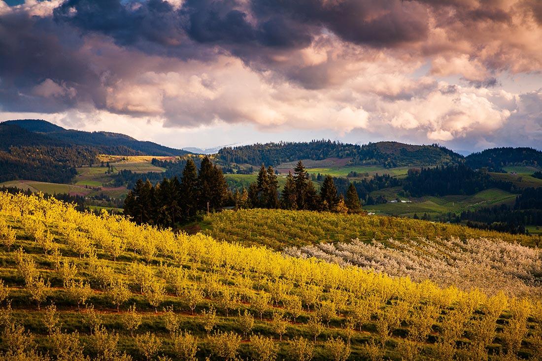Photo of rolling hills in Hood River, Oregon.