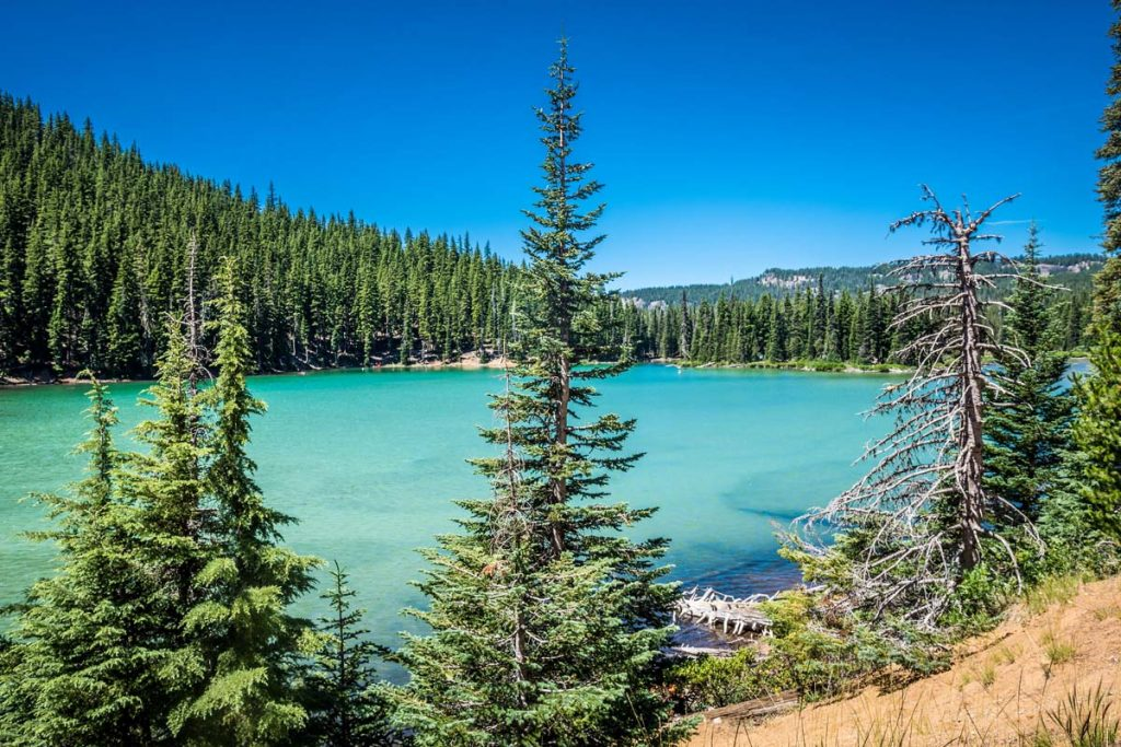 Photo of the Deschutes National Forest near Bend, Oregon