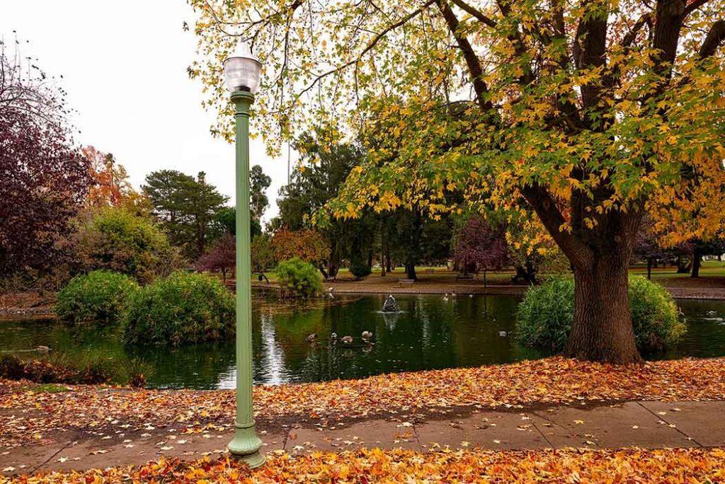 A photo of fall in Sacramento, CA.